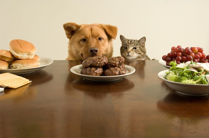 Healthy Recipes for Pets
